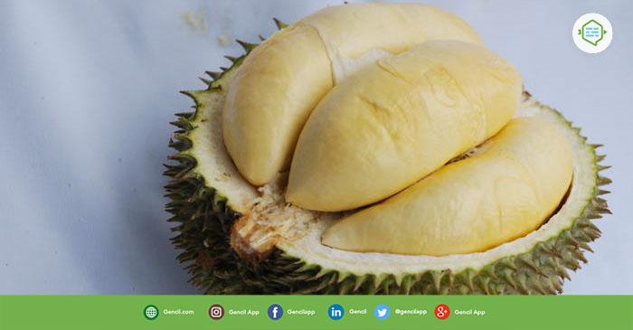 Uniknya Durian Terong Dari Kalimantan Barat
