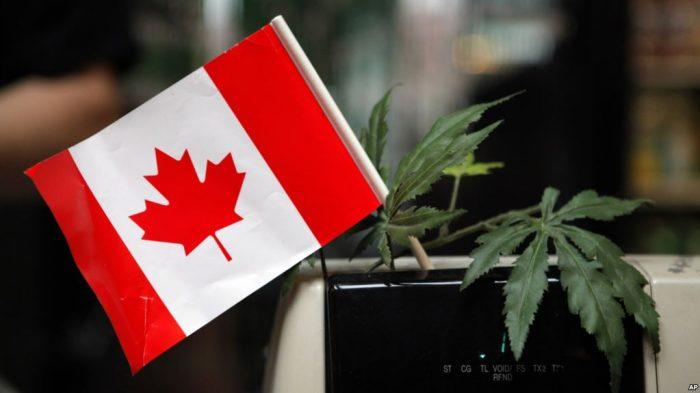 PM Kanada Justin Trudeau Nyatakan Mariyuana Legal di Negaranya