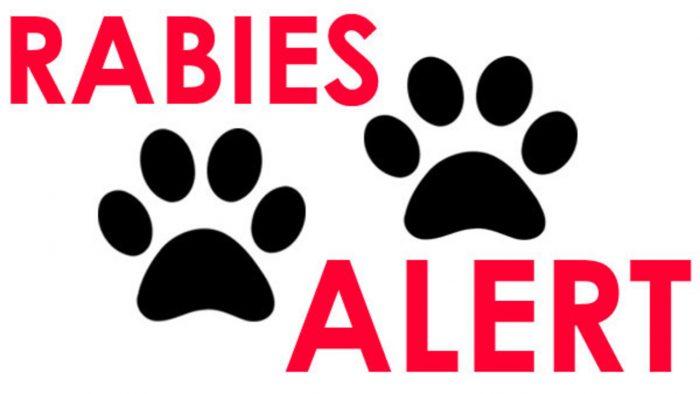 Tahun Ini 14 Korban Rabies di Kalbar