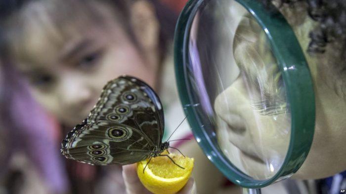Penyakit Misterius Sebabkan Kelumpuhan pada Anak