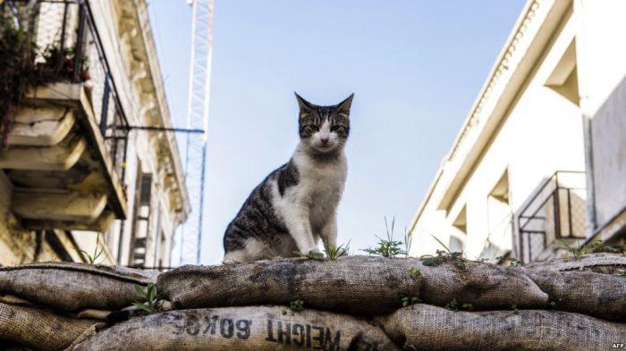 Awal Mula Interaksi Kucing dan Manusia