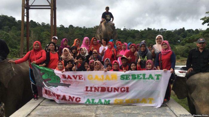 Benteng Terakhir Gajah Sumatra di Bengkulu Terancam