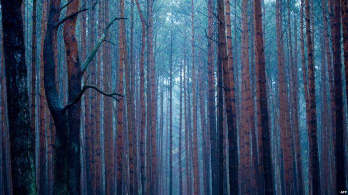 Tambang Tua Bisa Diubah jadi Hutan Pengisap Karbon