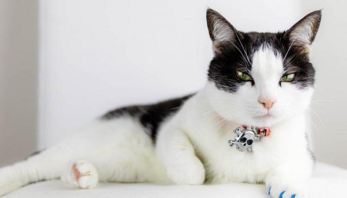 "Studi itu dimulai ketika periset Georgia Tech Alexis Noel pulang ke rumah keluarganya saat libur dari studinya. ""Kucing peliharaan keluarga saya, Murphy, duduk di pangkuan saya, di atas selimut yang terbuat dari microfiber. Dia menjilat selimut itu, dan lidahnya tersangkut di kain itu,"" kata Noel."