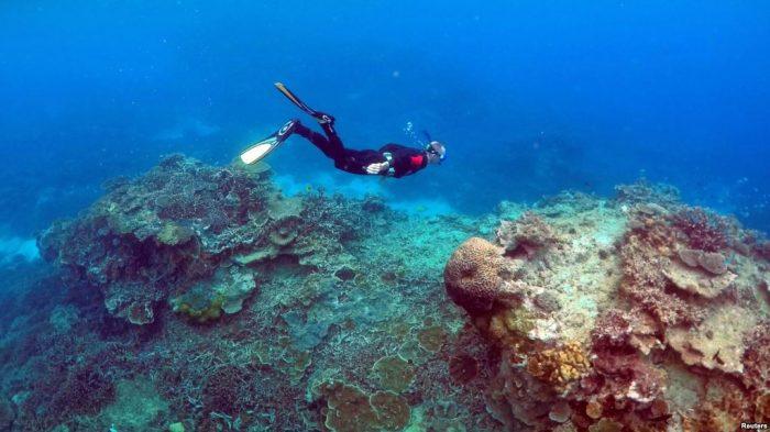 Surga Bawah Laut di Samudra Dalam Lepas Pantai Australia