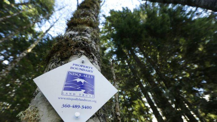 Hutan yang Sehat untuk Bumi yang Sehat