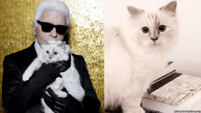 """Hasil Studi: Kucing Mengenali """"Nama"""" Karena Imbalan"""
