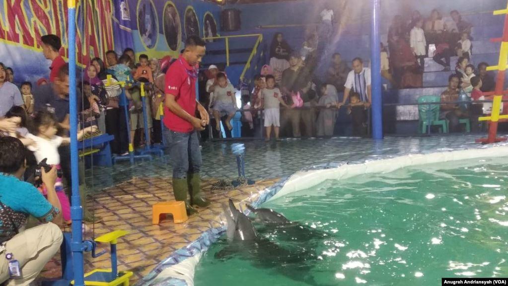 Sirkus Lumba-lumba di Medan Dikecam Keras