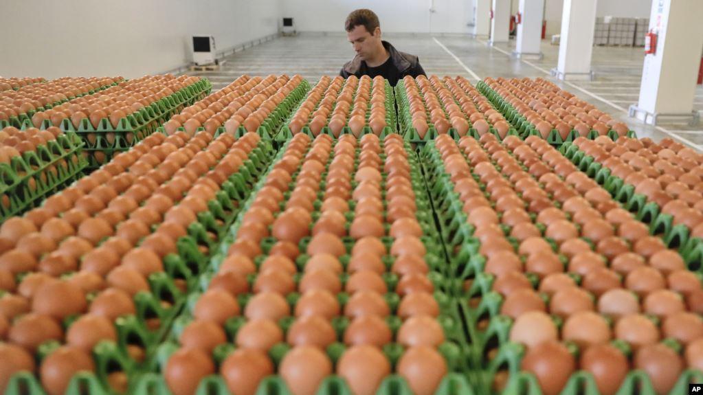 Isu Telur Mengandung Dioksin, Pemerintah Pastikan Bukan dari Peternakan Modern