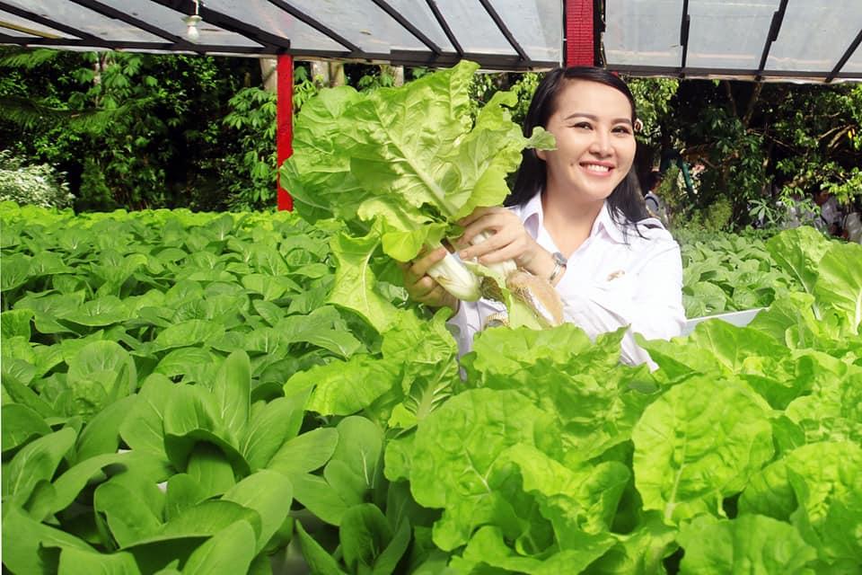 Panen Sawi Organik, Karolin Ajak Budidayakan Sayuran Hidroponik