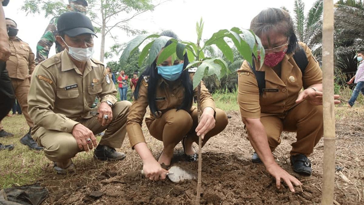 Bupati Landak Tanam Perdana Tanaman Terong Di Desa Salumang