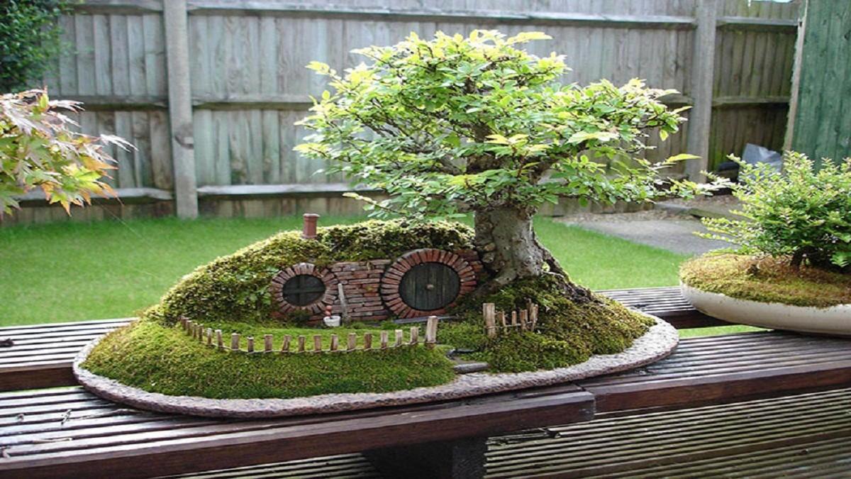 Inspirasi Tanaman Bonsai Untuk Menambah Estetik Rumah