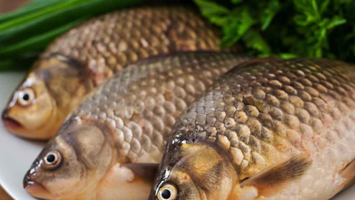 Dongkrak Penjualan Ikan, Anggota DPR Sri Lanka Makan Ikan Mentah