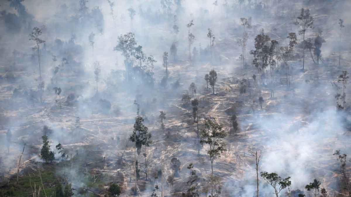 KLHK Klaim Angka Deforestasi RI Turun 75% pada 2020